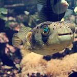 Big eye under water