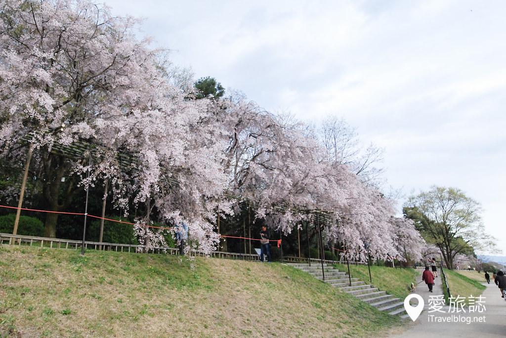 京都赏樱景点 半木之道 09