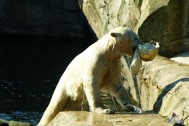 Zoo am Meer 08.03.2015  175