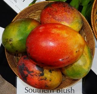 Mango  #280: SOUTHERN BLUSH  #2