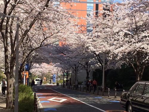 六本木ヒルズ さくら坂 2015/3/31