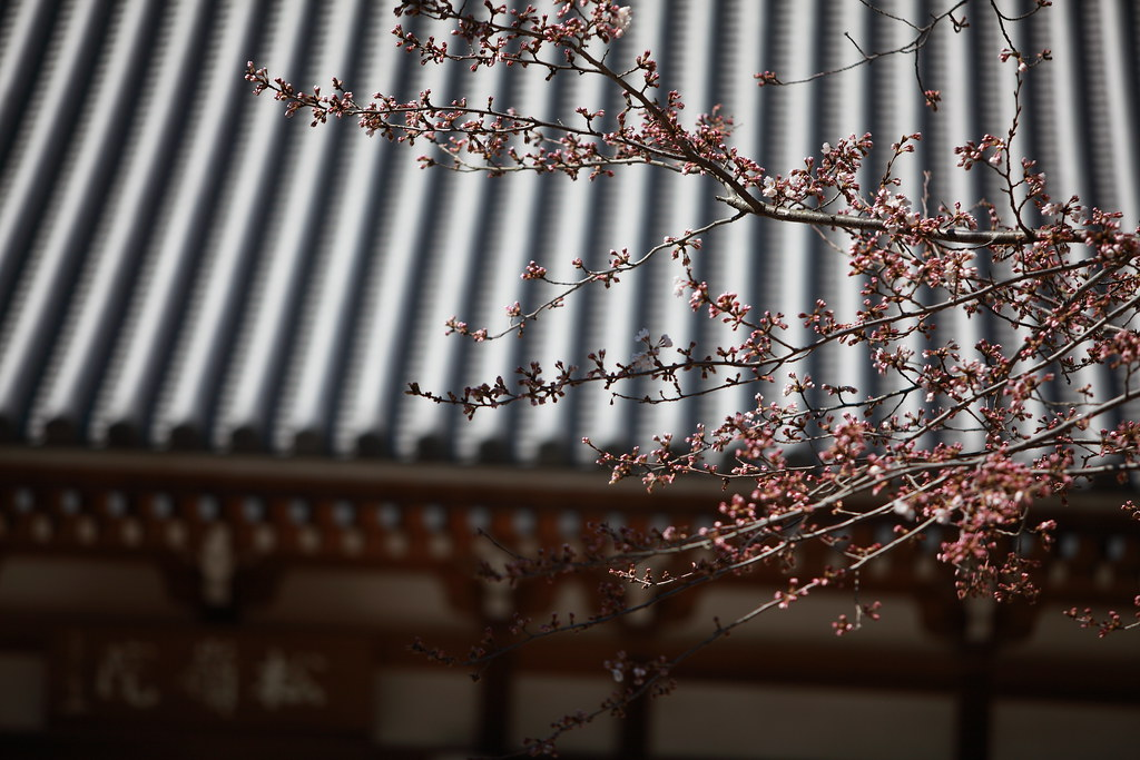 Blossom Blooming At A Zen Temple In Kamakura, Japan