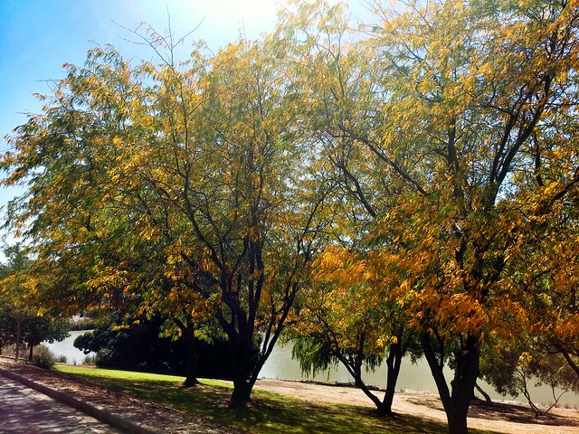 Love autumn and I love my walk around the lake on a near-daily basis