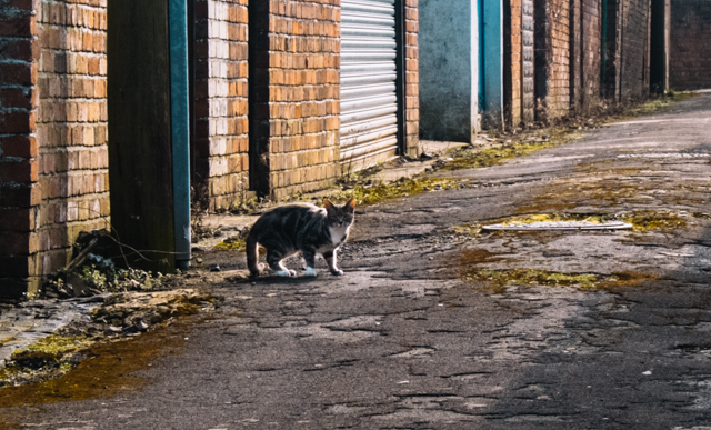 cat in alleyway