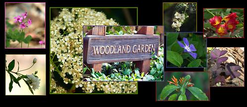 Woodland Garden at Boyce Thompson Arboretum