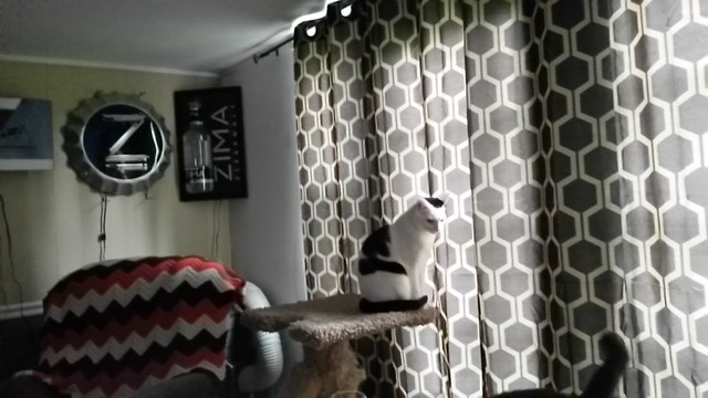 Closing the curtains will make Steve sad