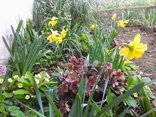 My spring garden - March 2015
