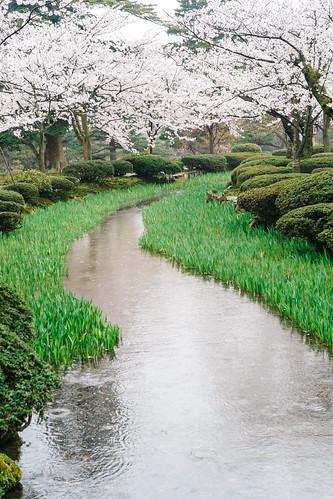 trip classic japan lens spring raw fuji cherryblossom sakura fujifilm 40mm voightlander manualfocus nokton cmos xp1 ishikawaken fastlens apsc kanazawashi xpro1 xtrans fujixpro1 fujifilmxpro1