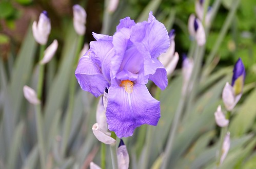 Iris 18.05 (1)