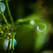 Droplets 3 of 3 by Don White (Burnaby) Thanks for the Three Million V