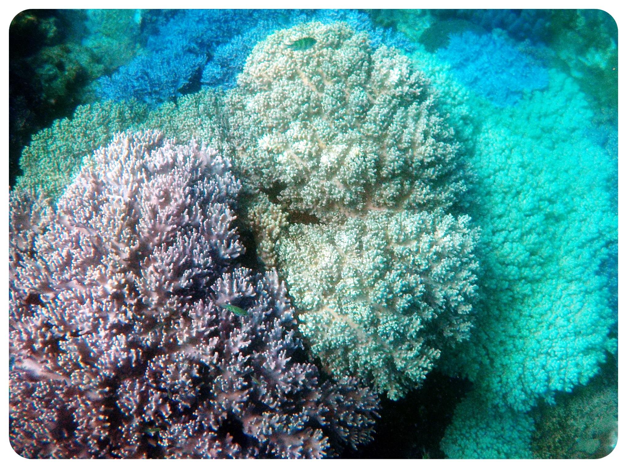 apo island underwater