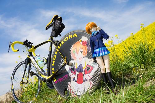 菜の花サイクリング