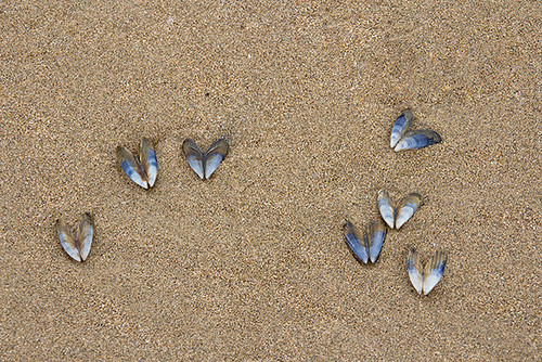 Envol de papillons