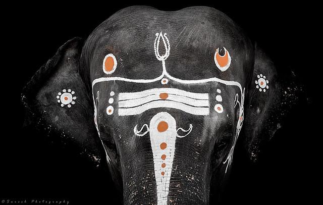 слон с рисунками на теле