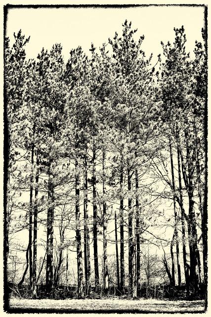 IMG_8464 Riko's Trees