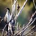 bird life - intaka island10