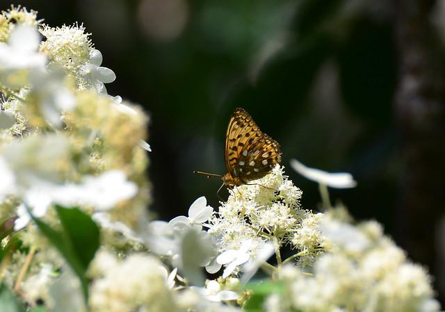 Photo:DSC_5382 By sdyfumi