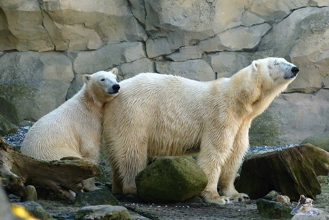 Zoo am Meer 08.03.2015  214