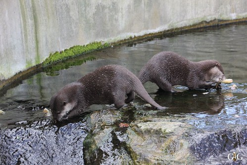 Oster-Montag im Zoo Berlin 06.04.201529