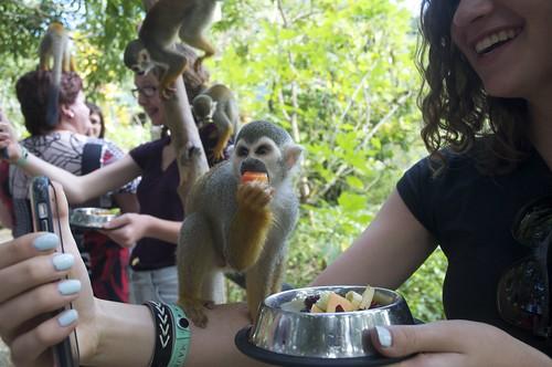 Monkey Land, Dominican Republic