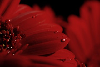 red droplets