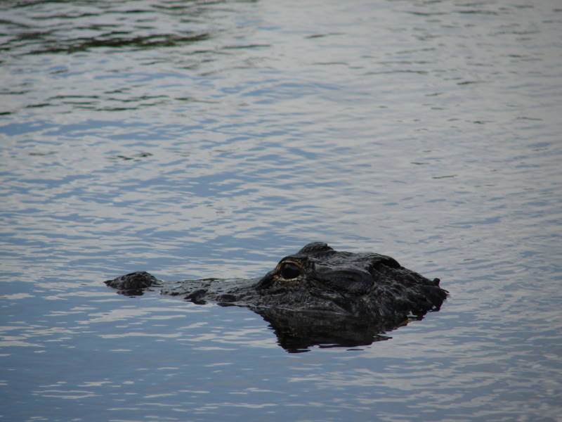 US Miami Everglades 0607 069