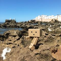 #Danbo at #Essaouira yey! #danboard #yotsuba #toy #travel