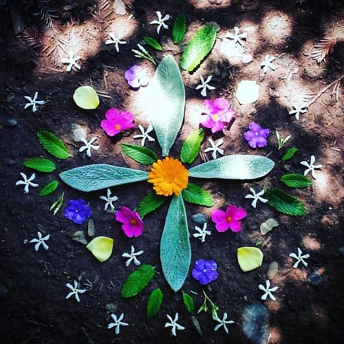 Garden Mandala No. 55 #spring #waldorfhome #mandala #gardening #flowers #leaves #landart #gardenartflowers #gardenart #lambsear #rockroses #calendula #starjasmine