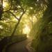 The Green Walk by albert dros