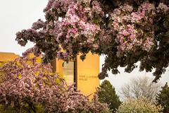 Spring Campus Flowers-24