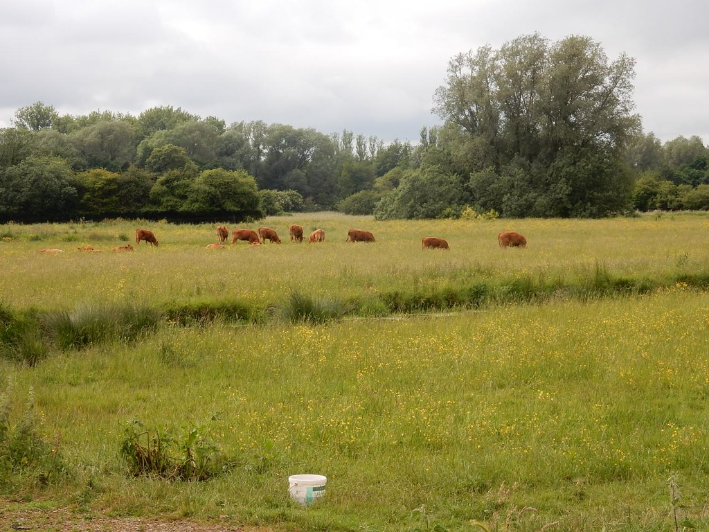 Sudbury meadows Bures to Sudbury