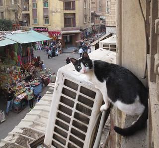 CatsAndDogs-5