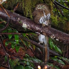 Spotted this owl in #Oregon with a squirrel for dinner.  #Art #Food #Nature #Survival #Follow #bird #animals