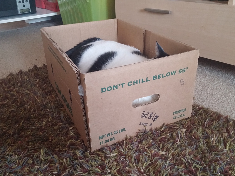 The Cat Life - ALL the boxes