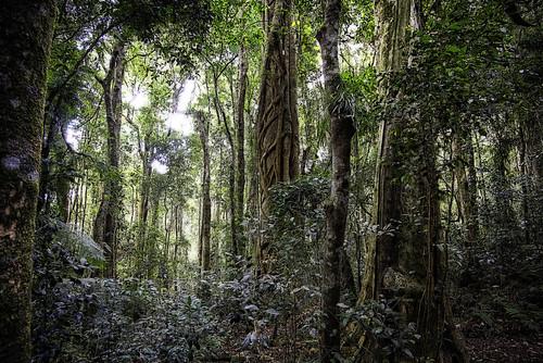 forest landscape rainforest nikond610 gondwanarainforestofaustralia lamingtonnatiionalpark