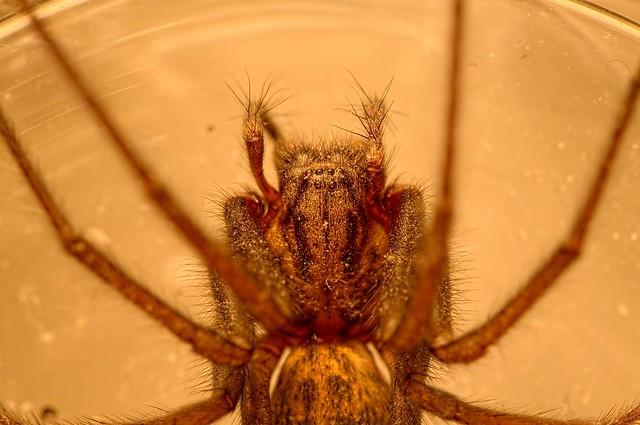 Casa Spider