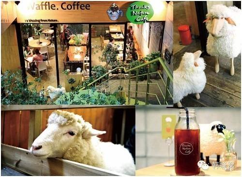 sheeps cafe 3