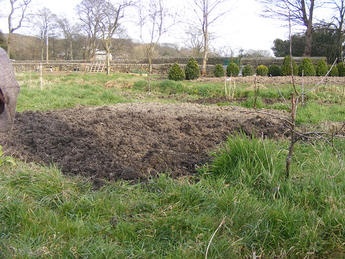 Allotment after winter 2
