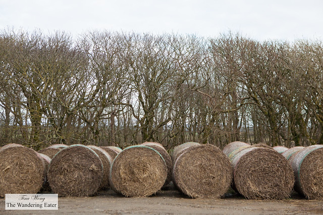 Large rolls of hay on the side of the farm
