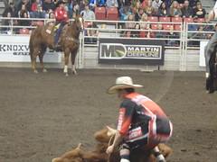 barrel racing(0.0), animal sports(1.0), rodeo(1.0), western riding(1.0), chilean rodeo(1.0), event(1.0), equestrian sport(1.0), sports(1.0), charreada(1.0), reining(1.0),