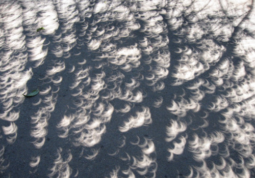 Image result for eclipse crescent shape tree shadow images