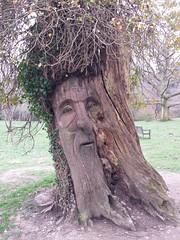 tree stump(0.0), art(1.0), root(1.0), branch(1.0), leaf(1.0), soil(1.0), wood(1.0), tree(1.0), geology(1.0), trunk(1.0),
