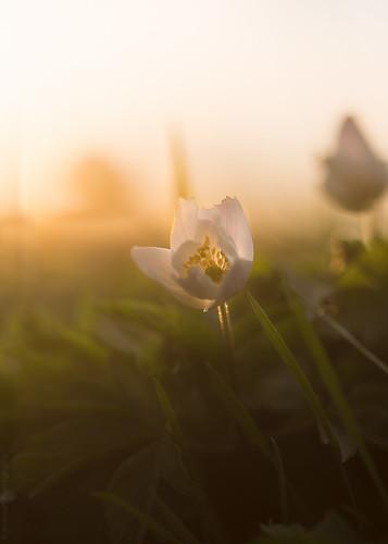 Little white flower // 07 04 15