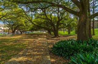 spring color on campus