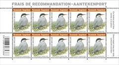 03bis OiseauRecommandé Sterne arctique zfeuille