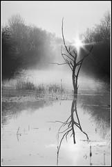 Cold Misty Sunrise