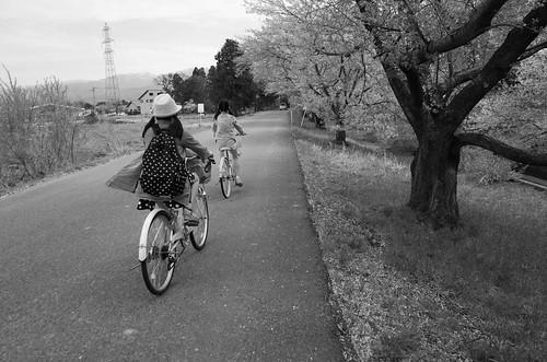 sakura memory 2015