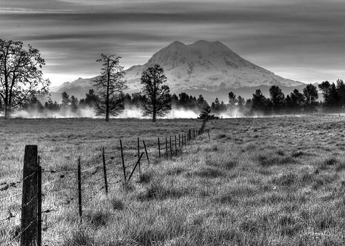 trees bw fog canon fence tamron mtrainier 1riverat matthewreichel