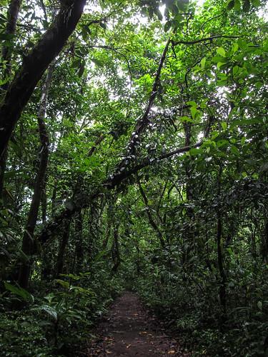 Tortuguero: balade à pied dans le Parc National