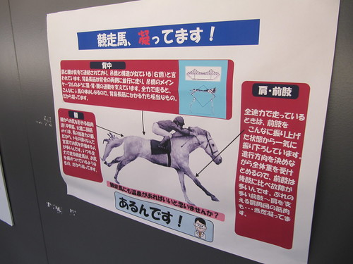 函館競馬場の馬の温泉の解説